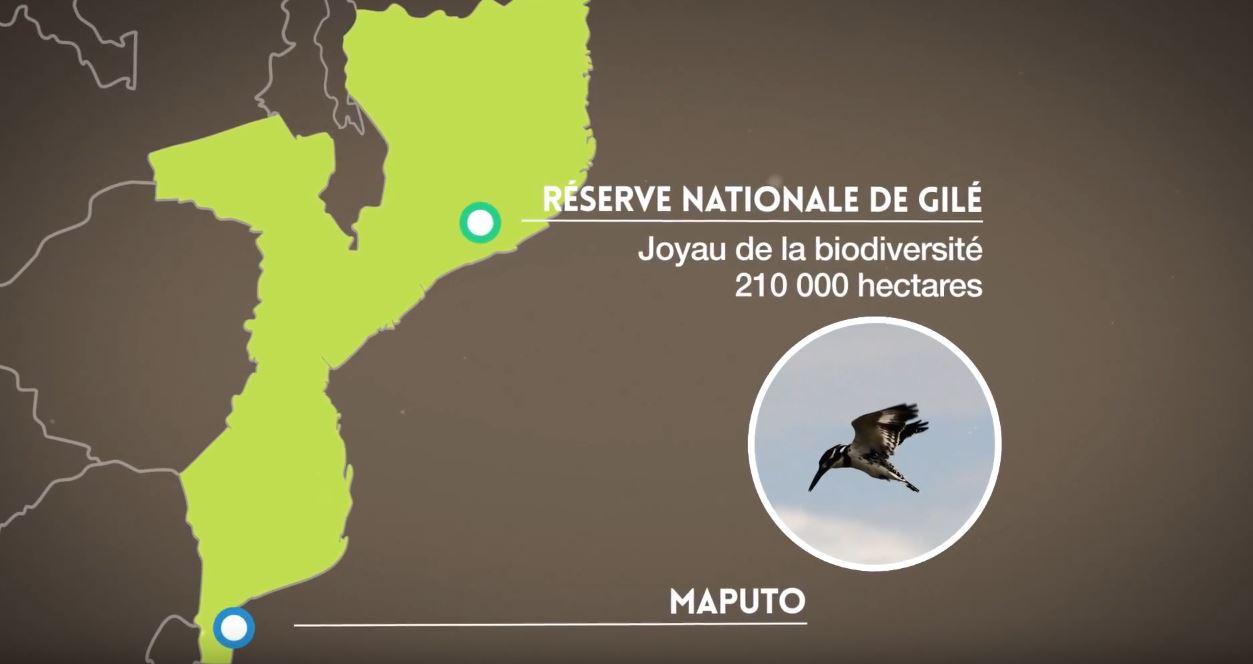 Réserve nationale de Gilé au Mozambique - Réduire la déforestation / FFEM