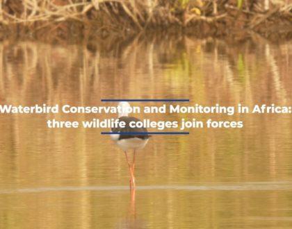 Améliorer les compétences et les capacités des professionnels africains de la faune sauvage en matière de gestion d'oiseaux et de gibiers d'eau migrateurs