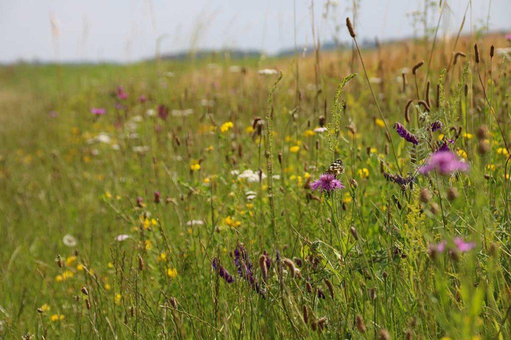 Bordures des champs : protégeons la biodiversité